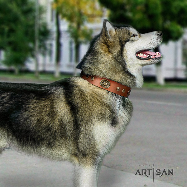 Malamute unique decorated full grain natural leather dog collar for everyday walking