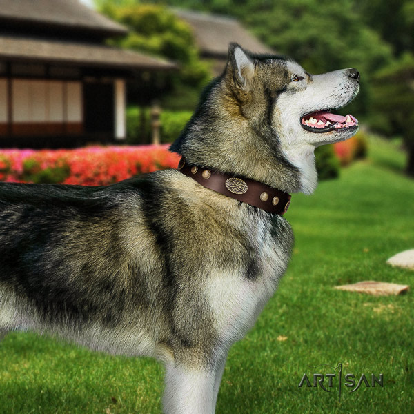 Malamute impressive adorned full grain natural leather dog collar for handy use