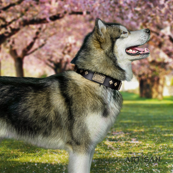 Malamute stylish adorned full grain natural leather dog collar for comfy wearing