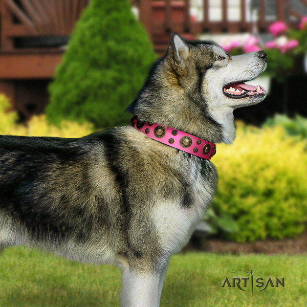 Malamute stylish decorated genuine leather dog collar for stylish walking