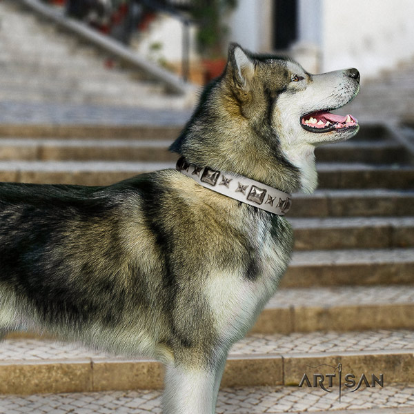 Malamute impressive decorated genuine leather dog collar for daily use