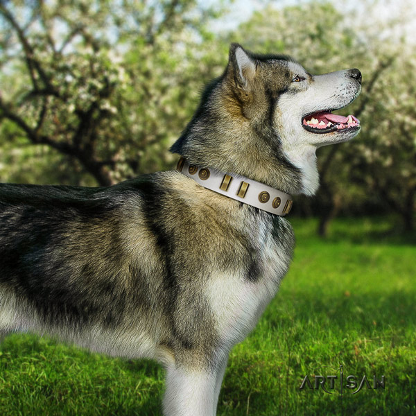 Malamute amazing studded natural leather dog collar for fancy walking