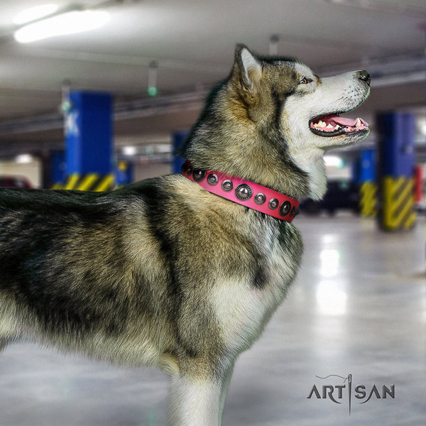 Malamute fashionable embellished full grain natural leather dog collar for everyday use