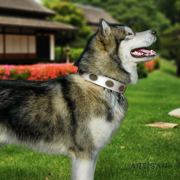 Malamute trendy studded genuine leather dog collar for fancy walking