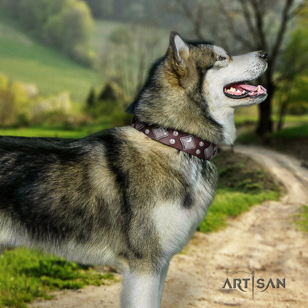 Malamute remarkable decorated genuine leather dog collar for stylish walking