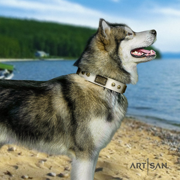 Malamute inimitable studded full grain natural leather dog collar for easy wearing
