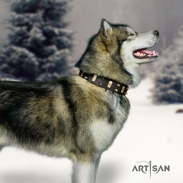 Malamute unusual embellished full grain genuine leather dog collar for comfy wearing