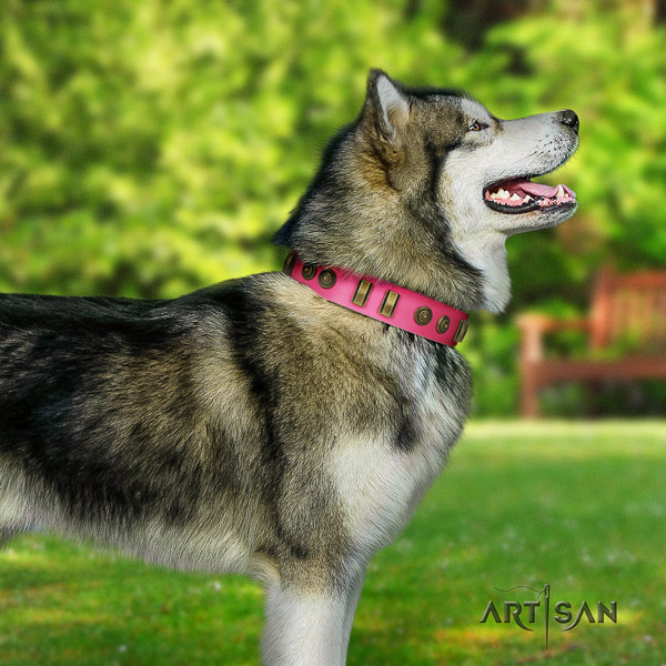Malamute unique embellished natural leather dog collar for handy use