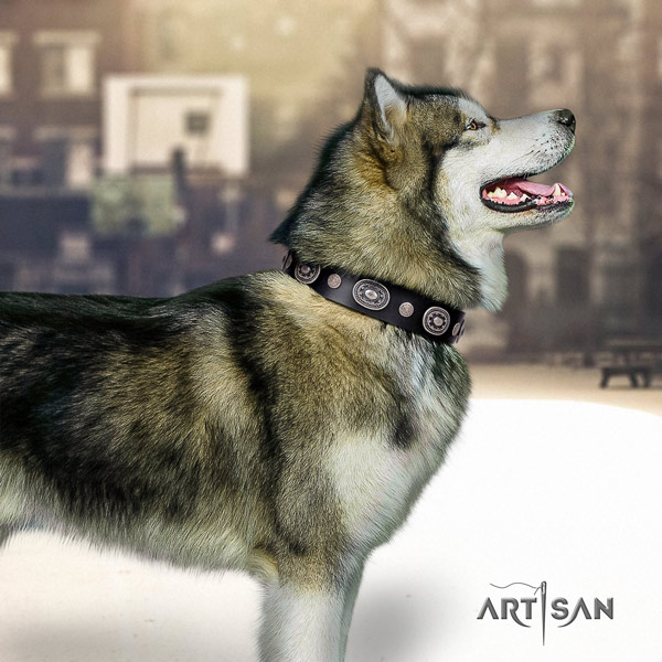 Malamute exquisite embellished full grain natural leather dog collar for comfy wearing