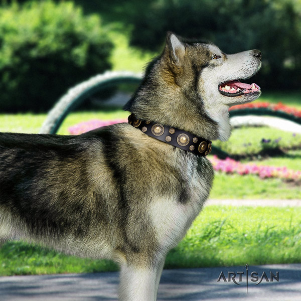 Malamute unusual adorned genuine leather dog collar for daily walking