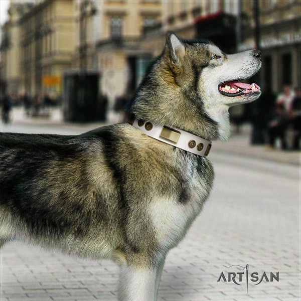 Malamute amazing embellished full grain leather dog collar for comfortable wearing