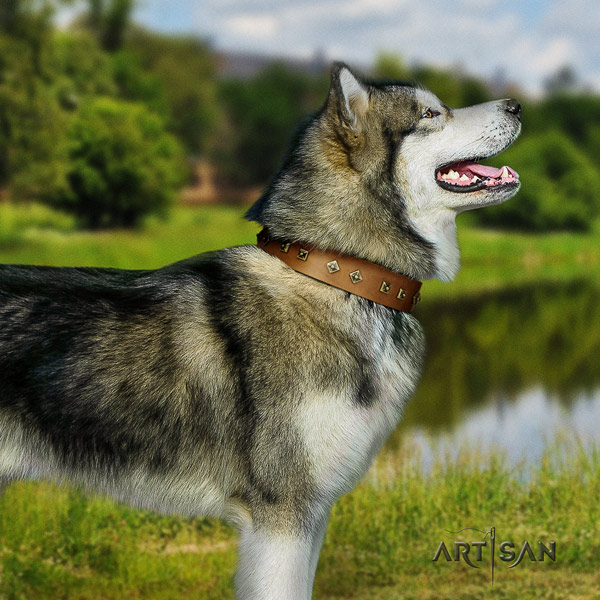 Malamute impressive adorned full grain natural leather dog collar for easy wearing