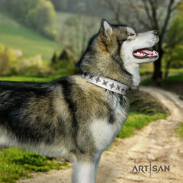 Malamute amazing studded natural leather dog collar for handy use
