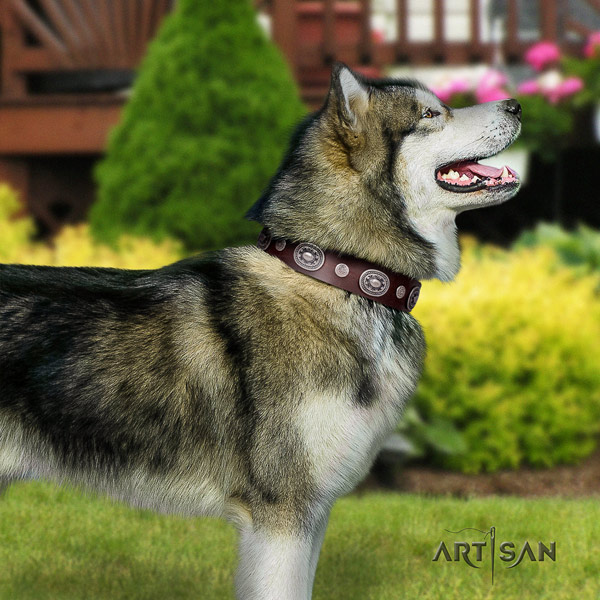 Malamute fashionable decorated genuine leather dog collar for fancy walking