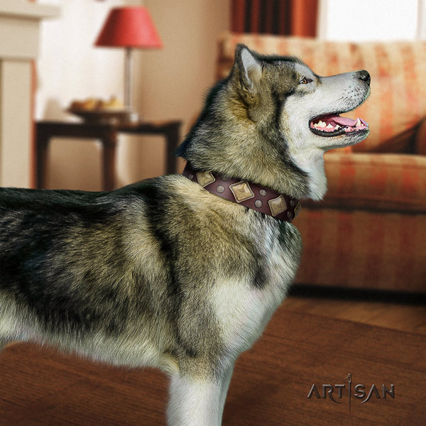 Malamute exquisite decorated full grain leather dog collar for everyday walking