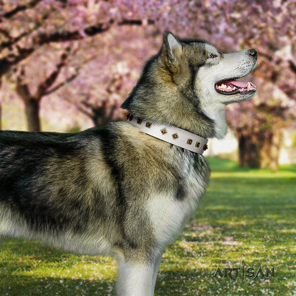 Malamute designer studded full grain genuine leather dog collar for comfy wearing