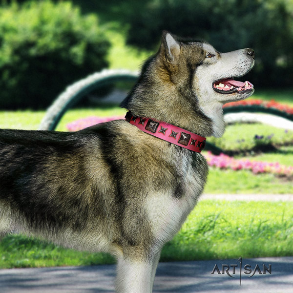 Malamute awesome adorned genuine leather dog collar for comfy wearing