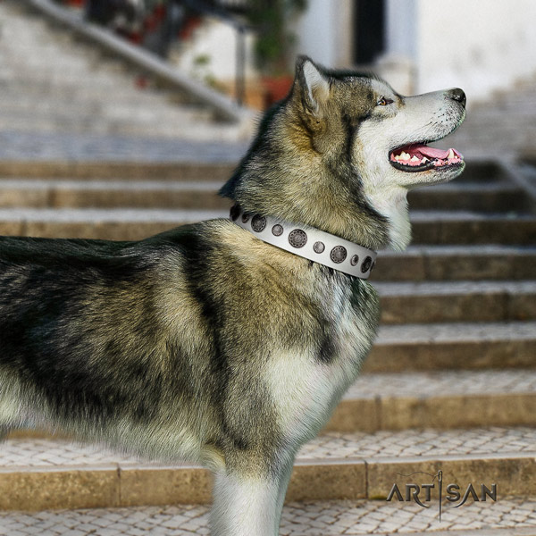 Malamute amazing embellished full grain natural leather dog collar for comfy wearing