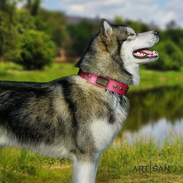 Malamute exceptional embellished full grain leather dog collar for daily walking