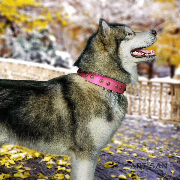 Malamute remarkable adorned natural leather dog collar for daily walking