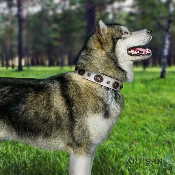 Malamute exquisite adorned full grain leather dog collar for comfy wearing
