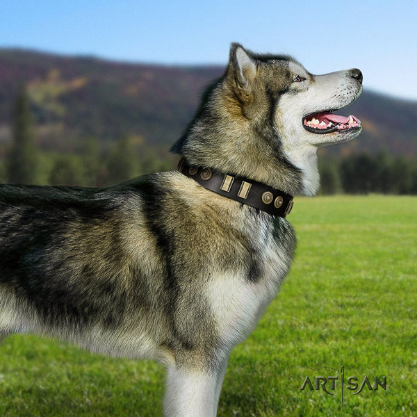 Malamute exceptional decorated leather dog collar for daily walking