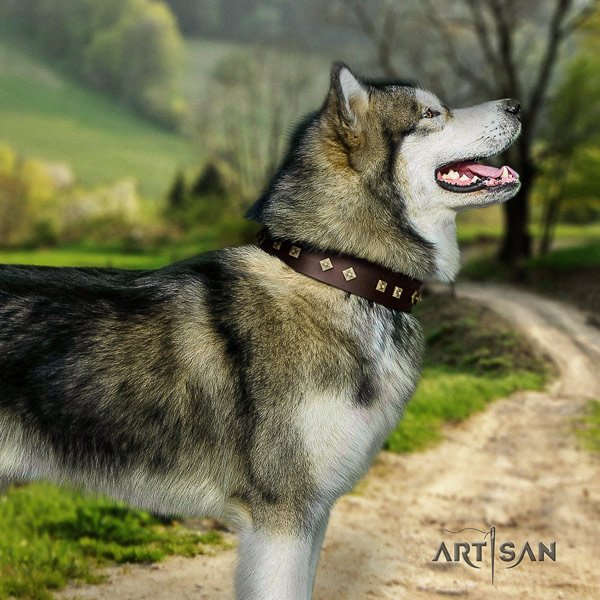 Malamute impressive adorned full grain leather dog collar for daily use