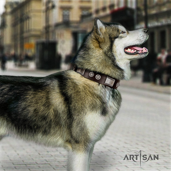 Malamute incredible embellished natural leather dog collar for daily walking