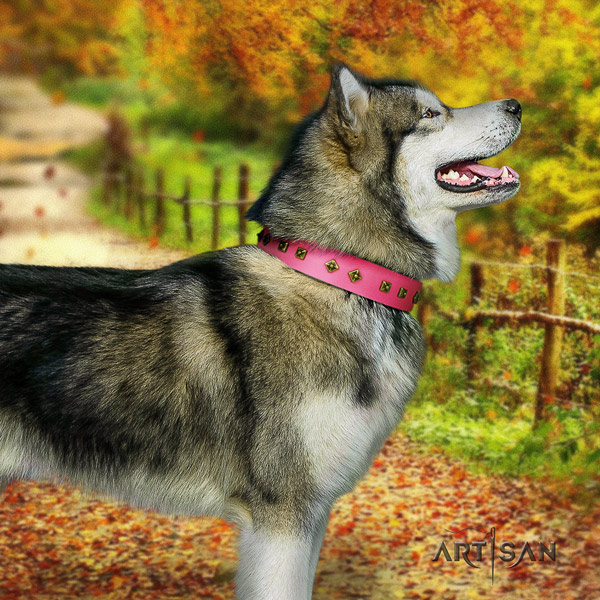 Malamute incredible studded full grain natural leather dog collar for handy use