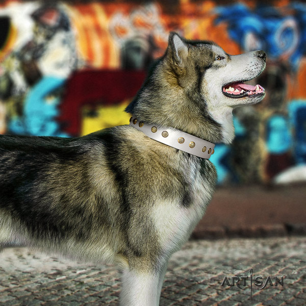 Malamute significant embellished full grain genuine leather dog collar for daily walking