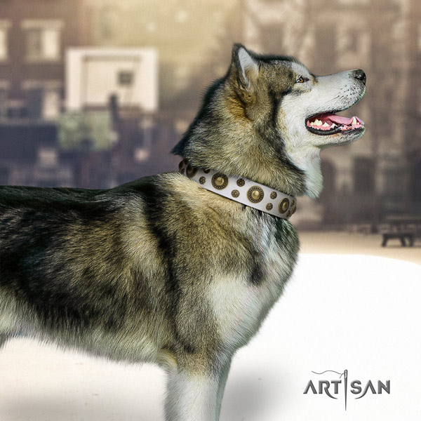 Malamute incredible embellished full grain genuine leather dog collar for comfy wearing