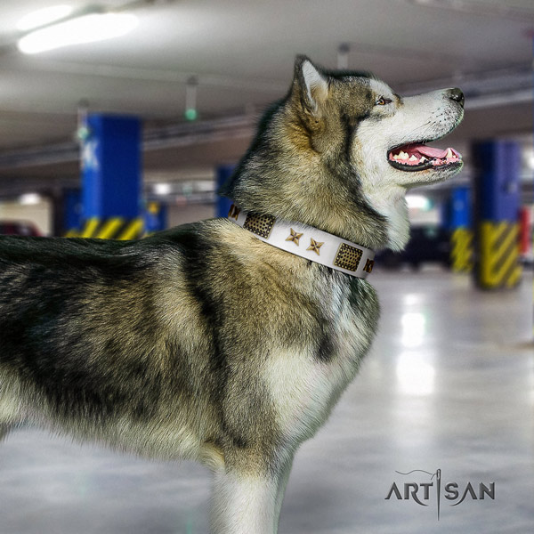 Malamute trendy studded leather dog collar for fancy walking