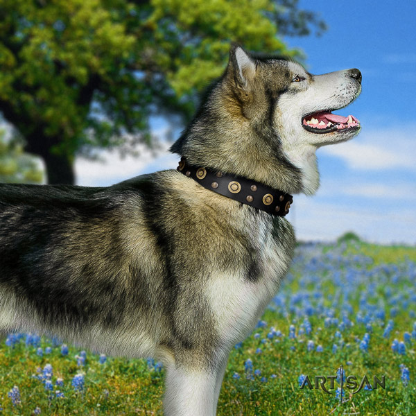 Malamute stylish decorated full grain leather dog collar for daily use