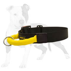 Best collar for stubborn dogs