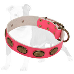 Walking Leather Collar for Female Canines