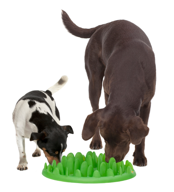 Plastic Feeder with Two Dogs Eating From It