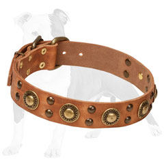 Trendy leather dog collar