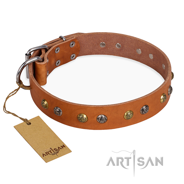 Handy use dog collar with Designer rust resistant studs
