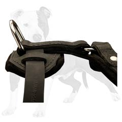 Super convenient D-ring for leash attachment