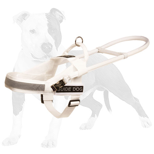 Everyday white nylon dog harness with easy to grab handle