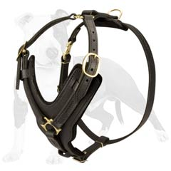 Reliable and totally safe harness for your dog