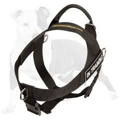 Best harness for working dogs