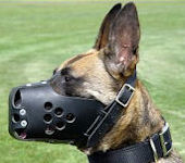 training dog muzzles