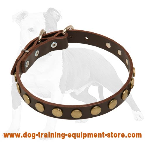 Leather Dog Collar With Circles for Training and Walking