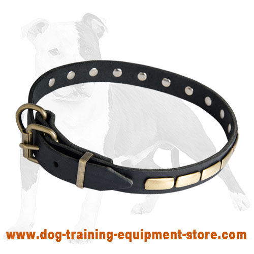 Designer Leather Dog Collar with Brass Plates for Fashion Walking