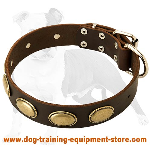 Exclusive Leather Dog Collar with Goldish Oval Plates for Fashionable Walking