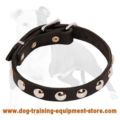Studded Leather Dog Collar for Walking Puppies and Small Breed Canines