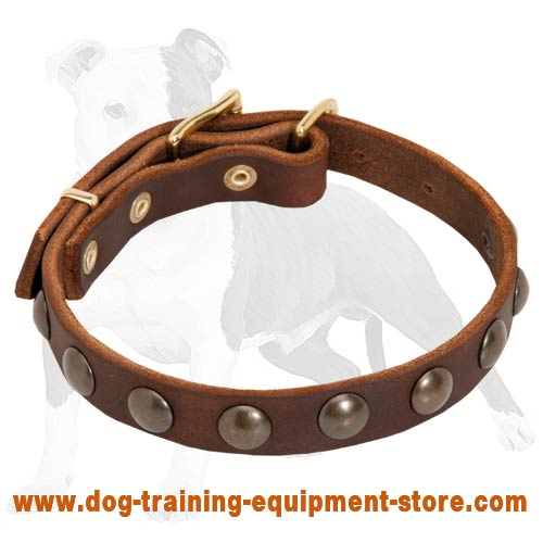 Leather Dog Collar Studded with Brass Half-Balls for Fashion Walking