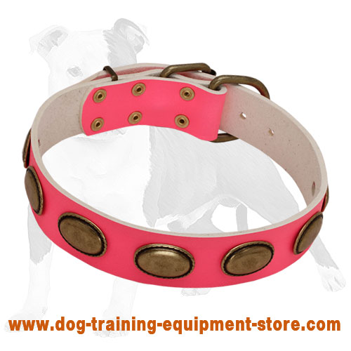 Pink Leather She-Dog Collar with Large Brass Oval Plates for Fashionable Walking