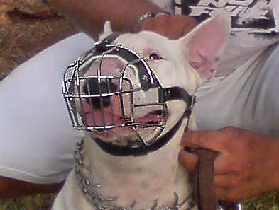 dog muzzle for bull terrier-english bullterrier wire basket muzzle